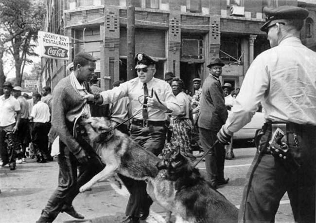 Image of Police Using Dogs on Black Demonstrators, Birmingham Ala., May 3, 1963